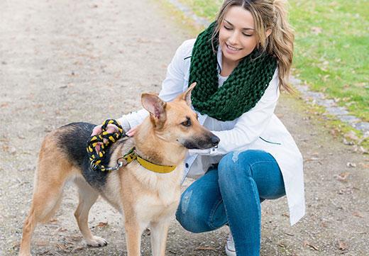 Hunde-Sitter und Tier-Betreuung – viel mehr als ein Gassigeh-Service